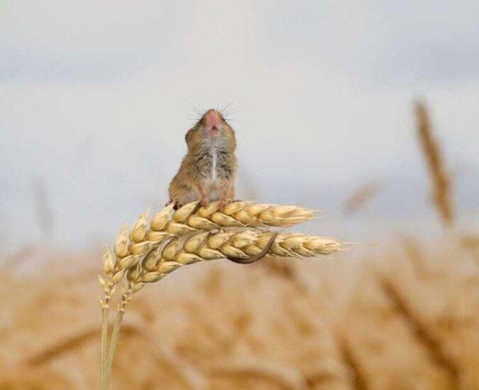 Der Mann hat sich mit den Mäusen angefreundet und macht ihnen nun schöne Fotoshootings