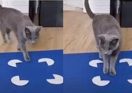 Katze und Kistenillusion. Quelle:dailymail.co.uk