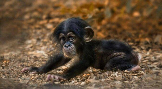 Der neugeborene Affe lachte zum ersten Mal und bezauberte die Zooarbeiter