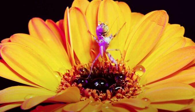"""""""Was mit bloßem Auge nicht zu sehen ist"""": Die Schönheit der Insektenwelt"""