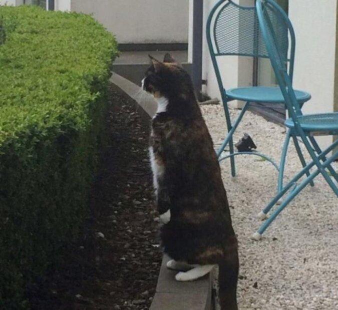 Jeden Tag kommt ein Kätzchen zum Nachbarhaus und lädt seine Lieblingsfreundin zu einem Spaziergang ein