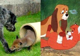 Hund und Fuchs. Quelle:dailymail.co.uk