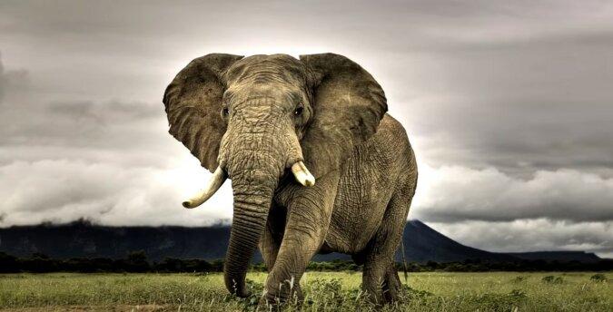 Elefant. Quelle: Screenshot YouTube