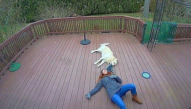 """""""Lass mich spielen"""": Der Goldene Retriever beschloss, mit der Jacke der Frau zu spielen, und rollte sie deshalb auf den Boden"""