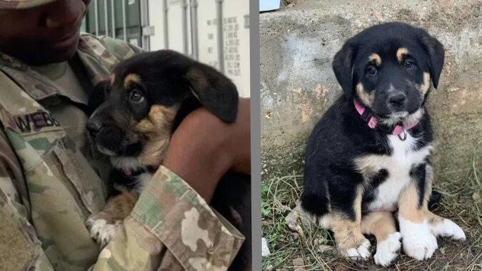Der niedliche Hund der Soldatin. Quelle: goodhouse