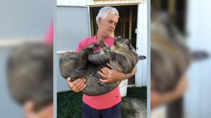 Ein weiblicher Wombat namens Miss Ruby. Quelle: esquire