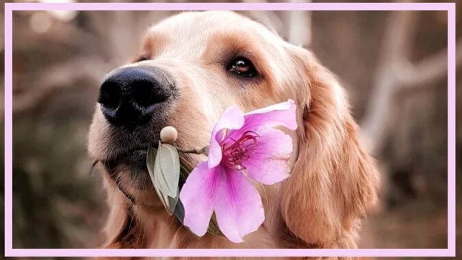Der Hund mit einer Blume. Quelle: goodhouse