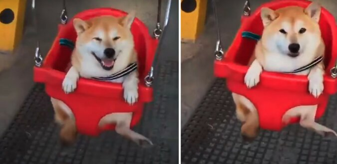 Hund. Quelle: screen YouTube