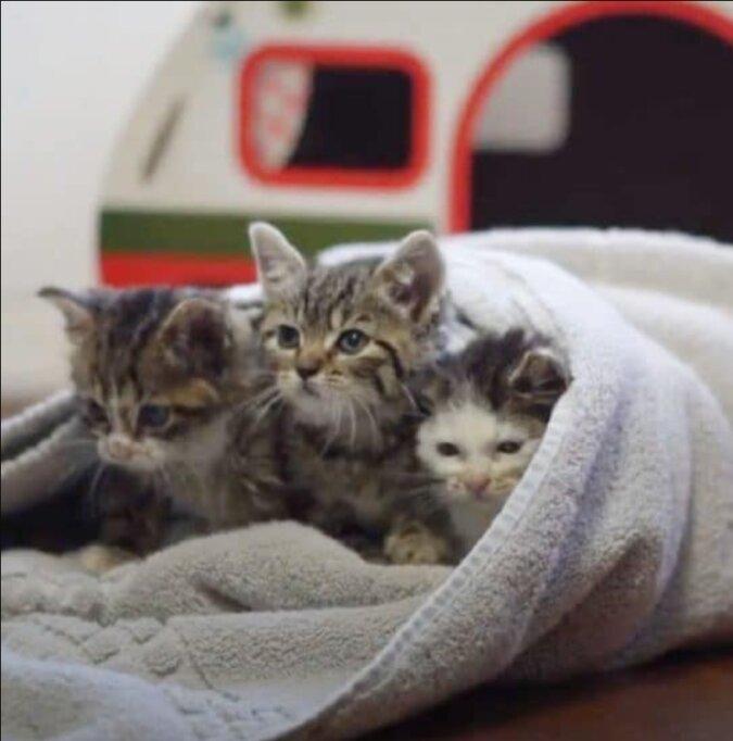 Lange Zeit arbeitete niemand in einem verlassenen Krankenhaus, darin gab es aber Kätzchen, die gerettet werden mussten