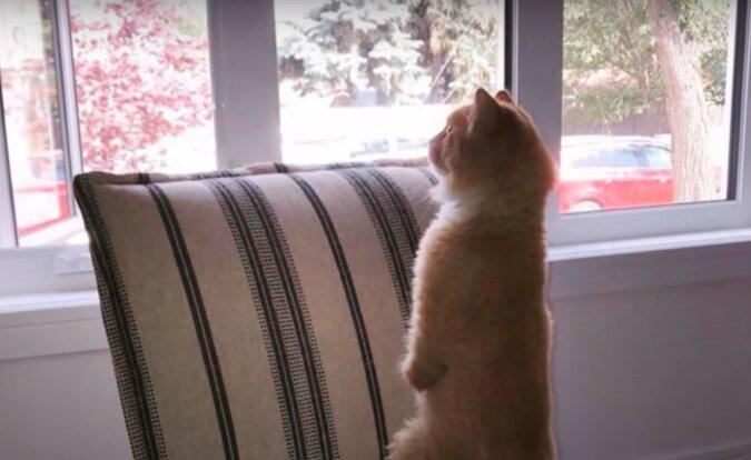 Kätzchen. Quelle: lemurov.net