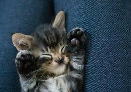 Niedliches Kätzchen. Quelle: zen.yandex