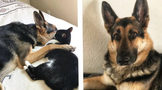Ein Hund und eine Katze. Quelle: zen.yandex