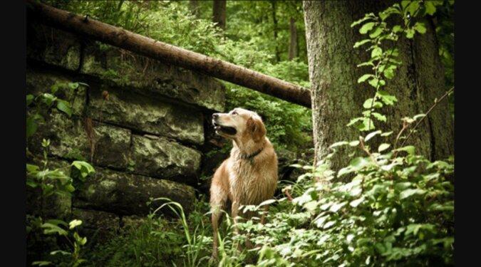 Retter sind bei der Suche nach einem vermissten Mann aufgeschmissen: Sein treuer Hund kam zur Rettung