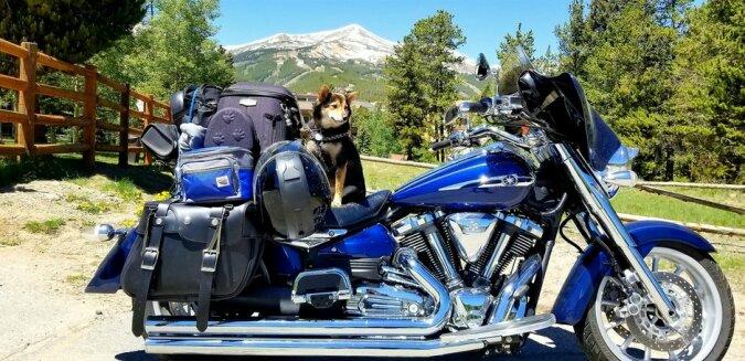 """""""Real Biker"""": Shiba Inu Hund liebt es, mit seinen besten Freunden Motorrad zu fahren"""