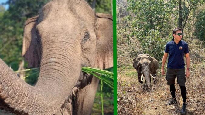 Der Mann und der Elefant. Quelle: goodhouse