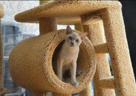 """Ein Mann hat ein Jahr lang ein """"Traumhaus"""" für seine Katzen gebaut: wie es nun aussieht"""