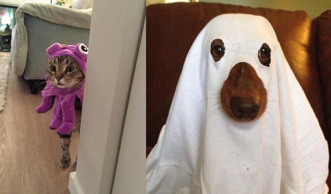 Halloween-Tiere. Quelle:dailymail.co.uk