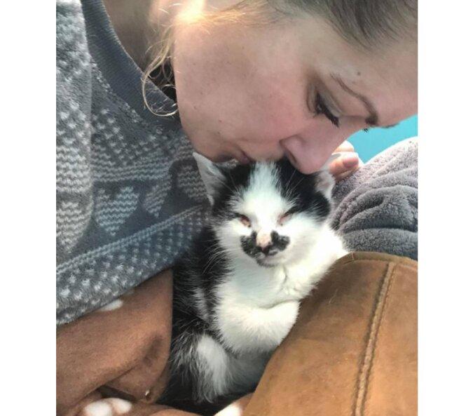 Als eine Frau hörte, wie ein Kätzchens weinte, konnte sie das Tierheim ohne das Tierchen einfach nicht verlassen