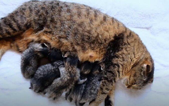 Katze mit Kätzchen. Quelle: Screenshot YouTube