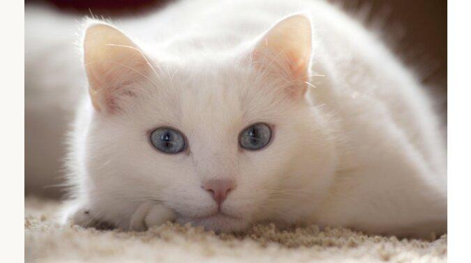 Katze, die drei Jahre vermisst war, wurde ins Krankenhaus gebracht und dem Besitzer zurückgegeben