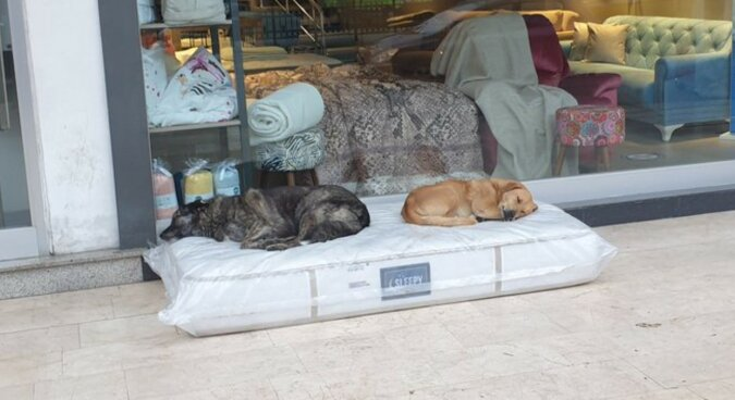 Schlafende Hunde. Quelle: goodhouse