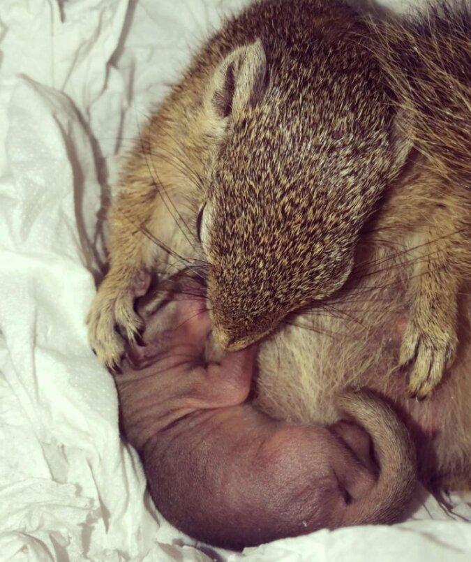 eine junge frau rettete ein neugeborenes eichhörnchen und