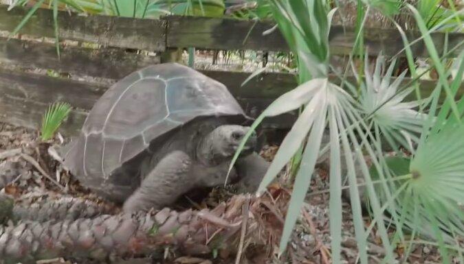 Schildkröte. Quelle: Screenshot YouTube