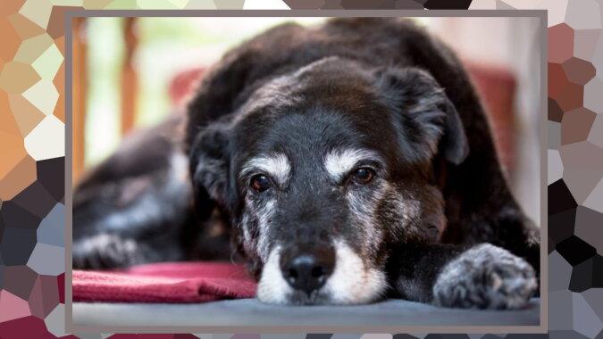 Ein alter Hund. Quelle: ivetta.com