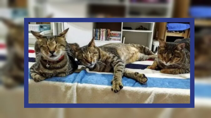 Drei Katzen. Quelle: zen.yandex