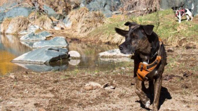 Ein Tierheimhund rettet den Planeten, indem er Plastik sammelt: niemand hat es ihm beigebracht