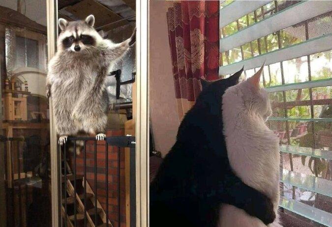 Amüsante Fotos von Tieren. Quelle:dailymail.co.uk