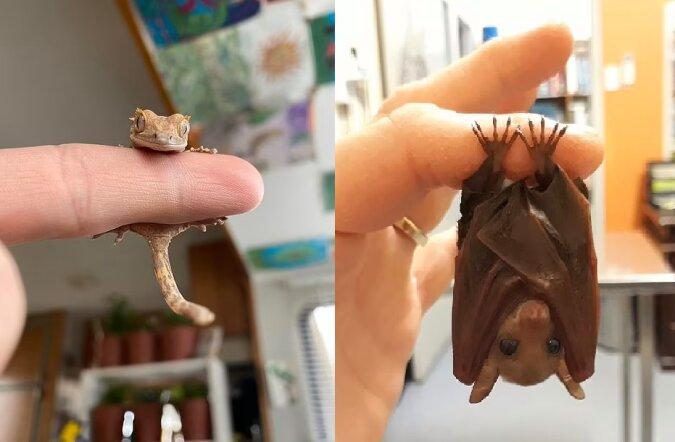 Die kleinen Tiere. Quelle:dailymail.co.uk