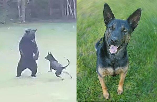 Der Hund namens Jameson. Quelle:dailymail.co.uk