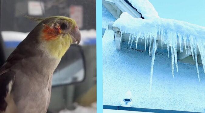 Ein Papagei und Winter in Texas. Quelle: wi-fi.com