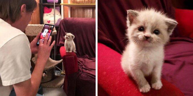 """""""Engelhaftes Lächeln"""": Das Kätzchen schenkte seiner Besitzerin während der Fotosession ein süßes Lächeln"""