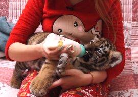 Frau und Tiger. Quelle: Screenshot YouTube