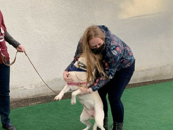 """""""Die Freude, den besten Freund zu treffen"""": Die zweimonatige Trennung des Labradors von seinem Besitzer ist vorbei"""