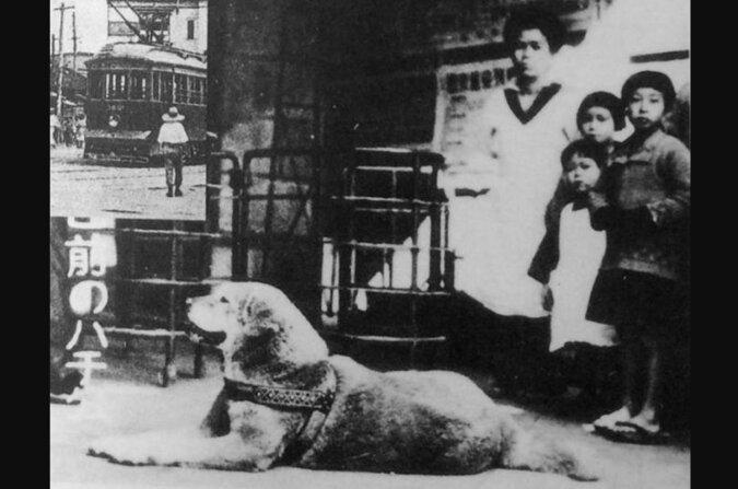 Die echte Geschichte von Hachiko: Wie der Hund, dessen Treue gefilmt wurde, aussah