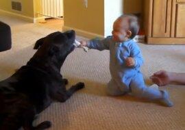 Die fürsorglichsten Babysitter: ein neugeborenes Baby, das von vier Hunden und einer Katze umsorgt wird