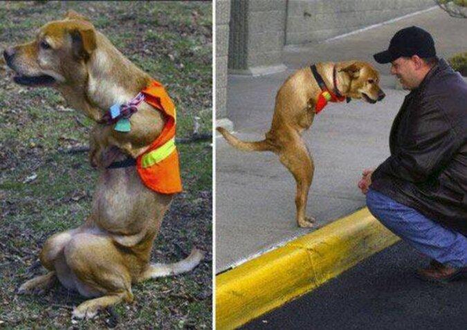 Die Tierärzte gaben den Hund ohne Vorderpfoten auf, aber er fand liebevolle Besitzerin, die ihm half, wieder laufen zu lernen