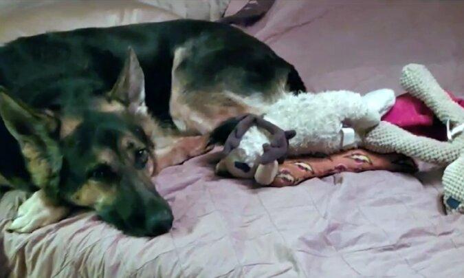 Der Hund, der dem Besitzer das Leben rettete. Quelle: Screenshot YouTube