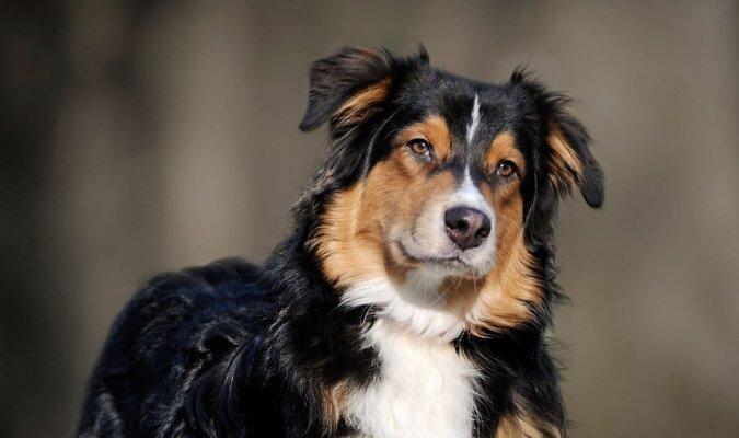 Die Hunde. Quelle:dailymail.co.uk