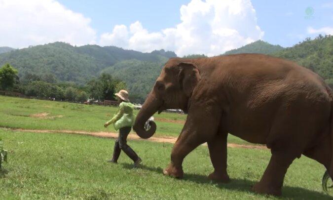 Eine Elefantin brachte eine Tierheimleiterin zu ihrem Baby, damit sie ihm ein Schlaflied singt