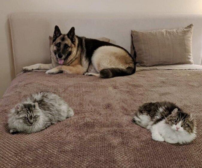 Eine edle Tat: Eine gutherzige Frau beherbergte zwei schwanzlose Kätzchen