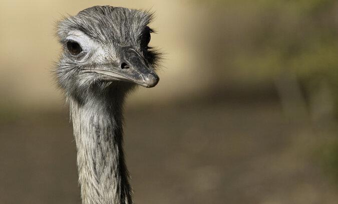 Während er mit seinem Hund in einem Wald spazieren ging, stieß ein Mann plötzlich auf einen seltenen südafrikanischen Vogel Rhea