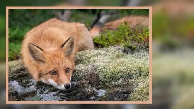 Ein kleiner Fuchs. Quelle: instagram