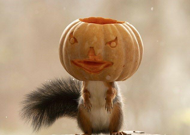 """""""Halloween für alle"""": Wie der Fotograf es geschafft hat, das Eichhörnchen dazu zu bringen, für Themenaufnahmen zu posieren"""