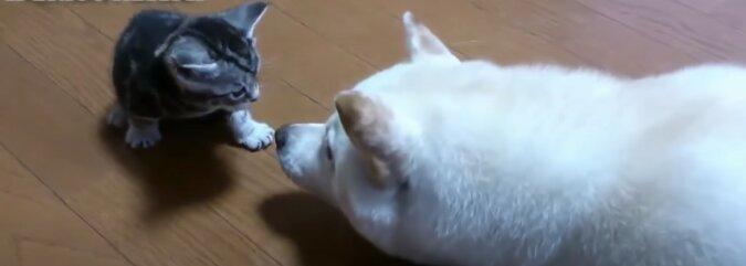 Kätzchen. Quelle:Screenshot YouTube