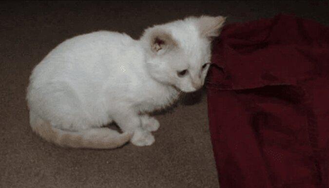 Ein Mann ließ ein kleines Kätzchen in einem Mülleimer nicht: Jetzt lebt der hübsche Stuart bei ihm zu Hause