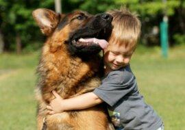 Eine Familie nahm einen Schäferhund aus einem Tierheim auf, aber das seltsame Verhalten des Hundes erschreckte sie
